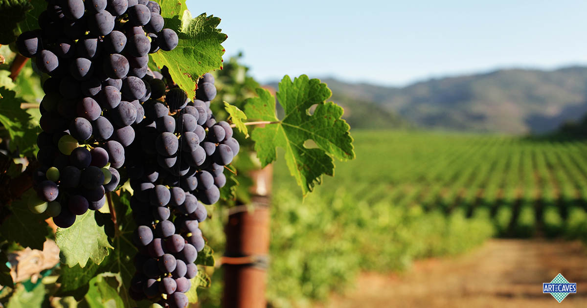 Os papéis dos taninos nos vinhos
