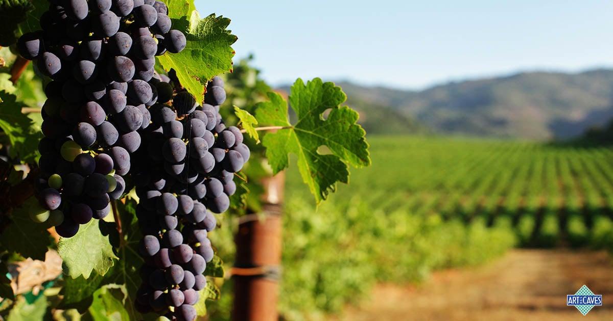 Uvas mais tânicas