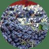 Vinhos Tintos de Corpo Médio