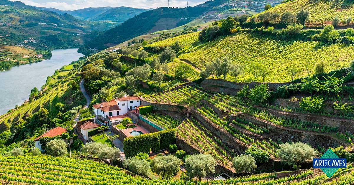 Conheça os melhores vinhos portugueses